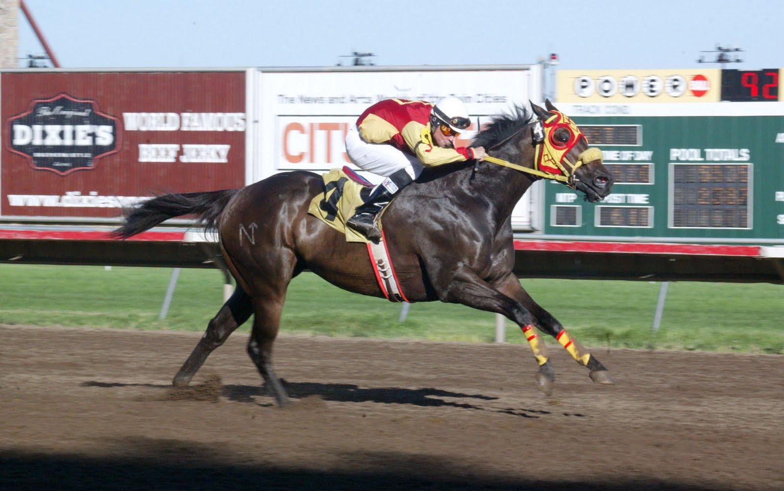 Quarter Horse Images Pictures amp Photos  CrystalGraphics