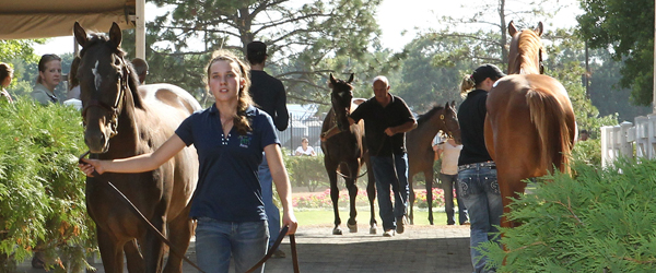 2012 MTA Yearling Sale