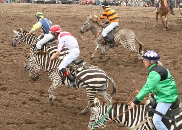 Zebra Start 7-20-13
