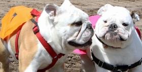 Bulldog Races May 25