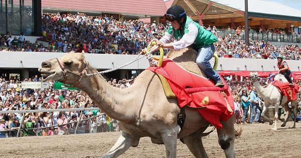 Scott Bethke rides Donald Hump to victory