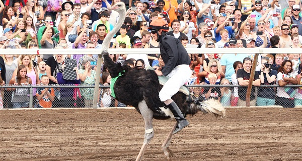 Extreme Day Ostrich